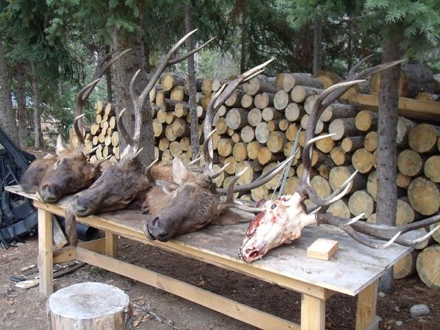 Idaho elk camp
